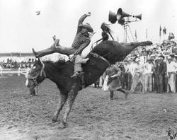 Alvin Nelson Pro Rodeo Hall Of Fame