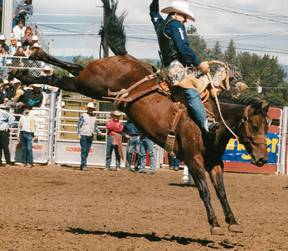 Spring Fling Pro Rodeo Hall Of Fame